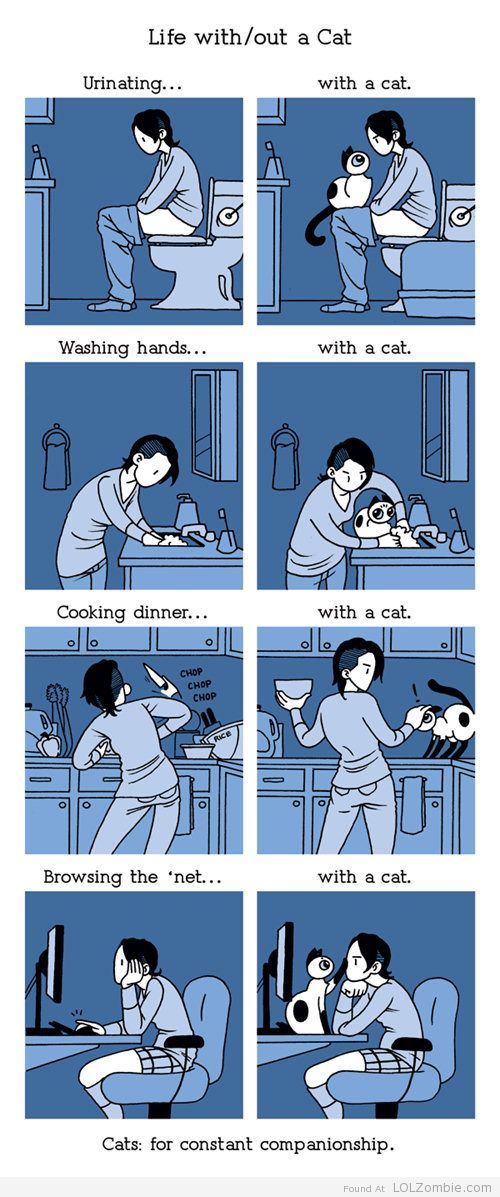 Life with and without cats.