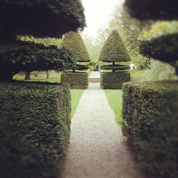 116 Best Images About Yew Hedges On Pinterest