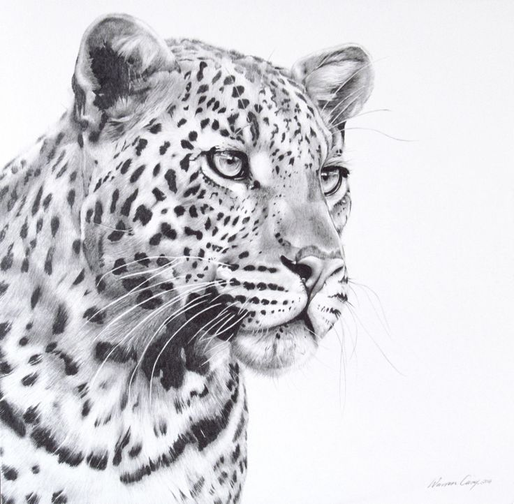 Leopard portrait done in pencil.