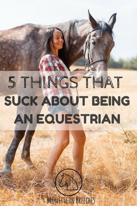 137 best all things equine images on Pinterest   Horses, Horse ... Different Equestrian Supplies You Should Have With on