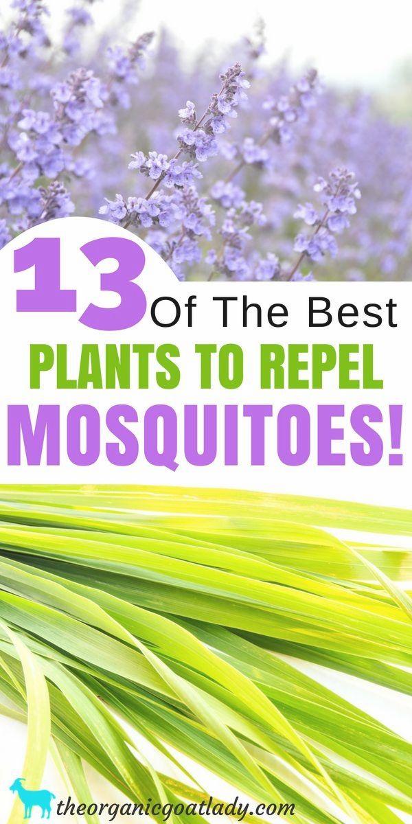Top 10 Essential Oils That Repel Bugs + Bug Spray Recipe