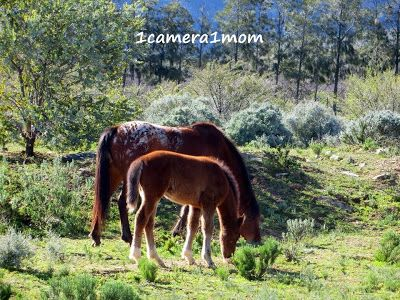 1camera1mom: Wildflowers and Horses - Visit my travel photography blog to see more! #horses #flowers #travel #photography