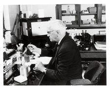 Bacteriologist Sir Alexander Fleming