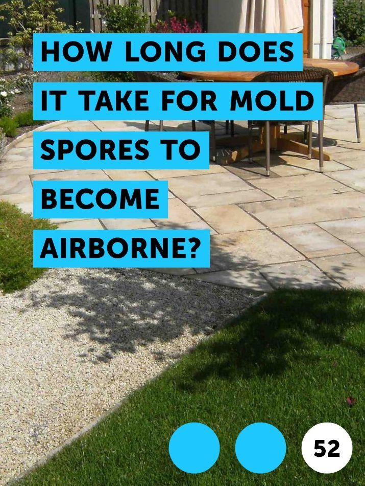 How Long Does it Take for Mold Spores to Become Airborne ...