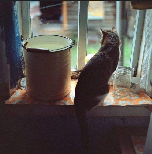 Anton Novoselov// flickr:    IFTTT Tumblr | kitties | Art