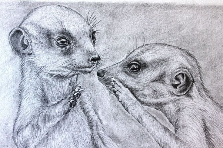 High Five Meerkats A3 with Graphites 080715