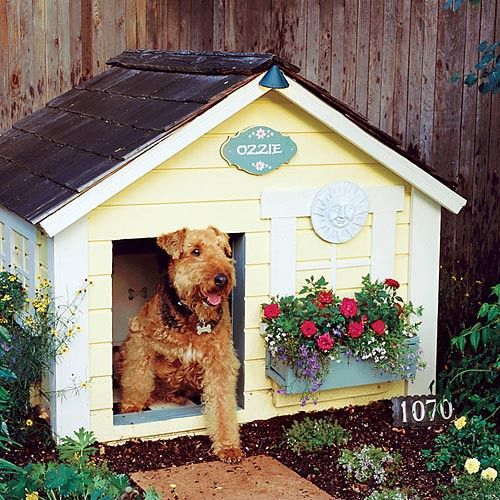 backyard landscape for dogs | small backyard landscaping ideas | landscaping photos| #diy#