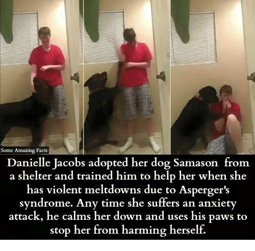 Facts, Memes, and Anxiety: Some Amazing Facts   Danielle Jacobs adopted her dog Samason from   a shelter and trained him to help her when she   has violent meltdowns due to Asperger's   syndrome. Any time she suffers an anxiety   attack, he calms her down and uses his paws to   stop her from harming herself.