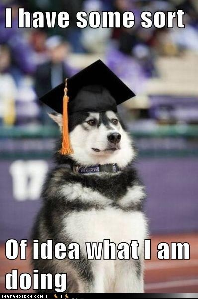 funny dog pictures - I have some sort  Of idea what I am doing  #pet #husky