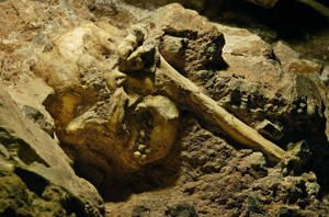 Little Foot ~ found on the Sterkfontein caves, northwest of Johannesburg and barely a meter tall, Little Foot fell into a 20-metre (66-foot) hole and died, possibly while running from a predator. He rolled down a steep slope and came to land with his left arm stretched out over his head roughly 3 million years ago...