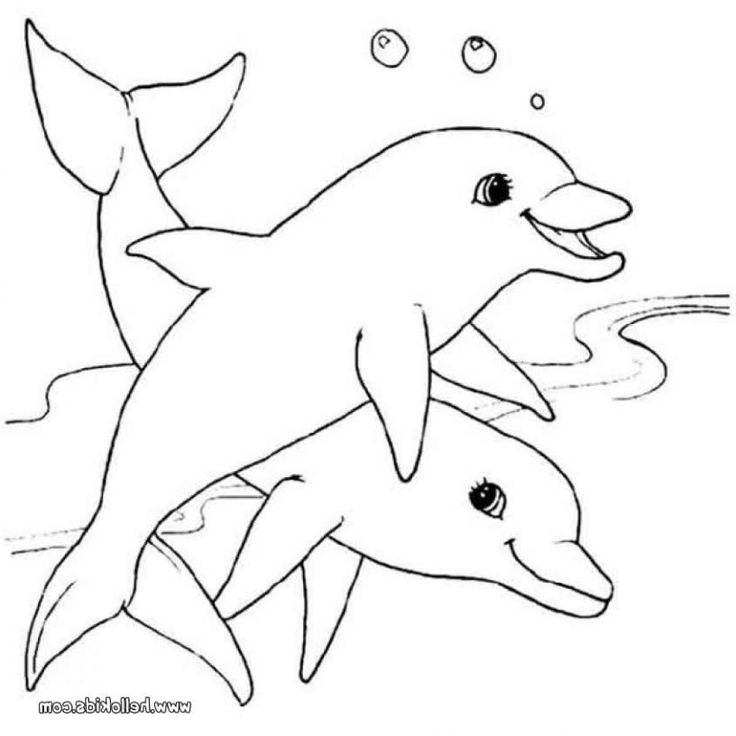 two dolphins big play together coloring pages for kids printable dolphins coloring pages for kids