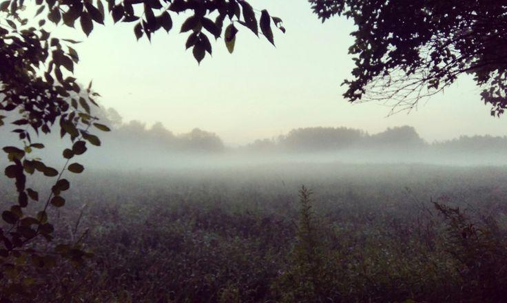 Brompton fog