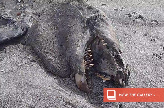 Real Pictures of the Unexplained | mysterious carcass ...