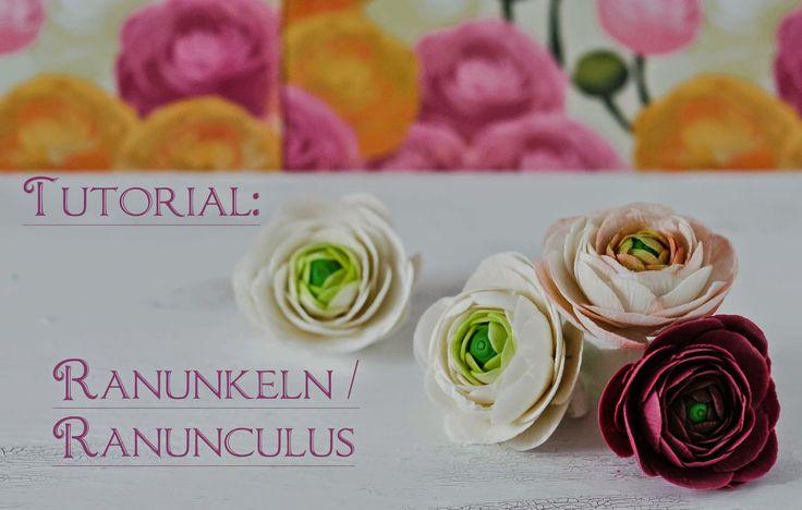 Ranunkeln / Ranunculus