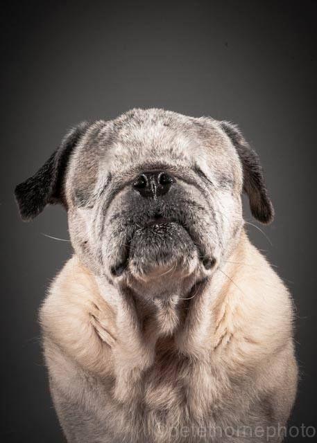 Hazel Eyes Dog Rescue Reviews