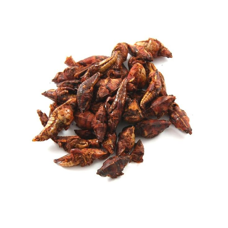 New in! Edible grasshoppers - the classic Mexican 'chapulines'. A traditional beer snack from Oaxaca.