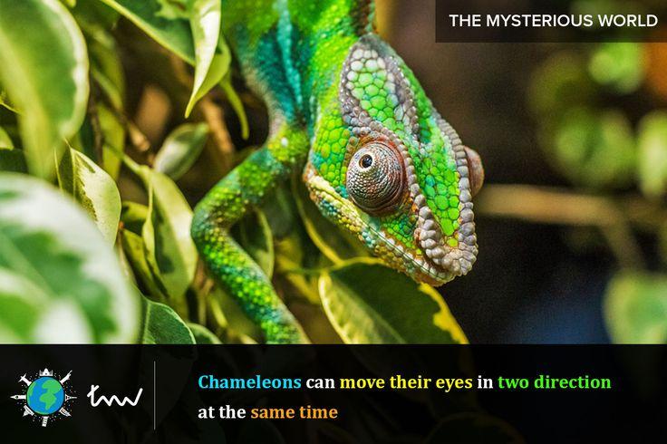 #animals #chameleon #facts