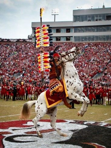 Florida State University - Renegade and Chief Osceola on the Field Photographic Print from Ross Obley at AllPosters.com