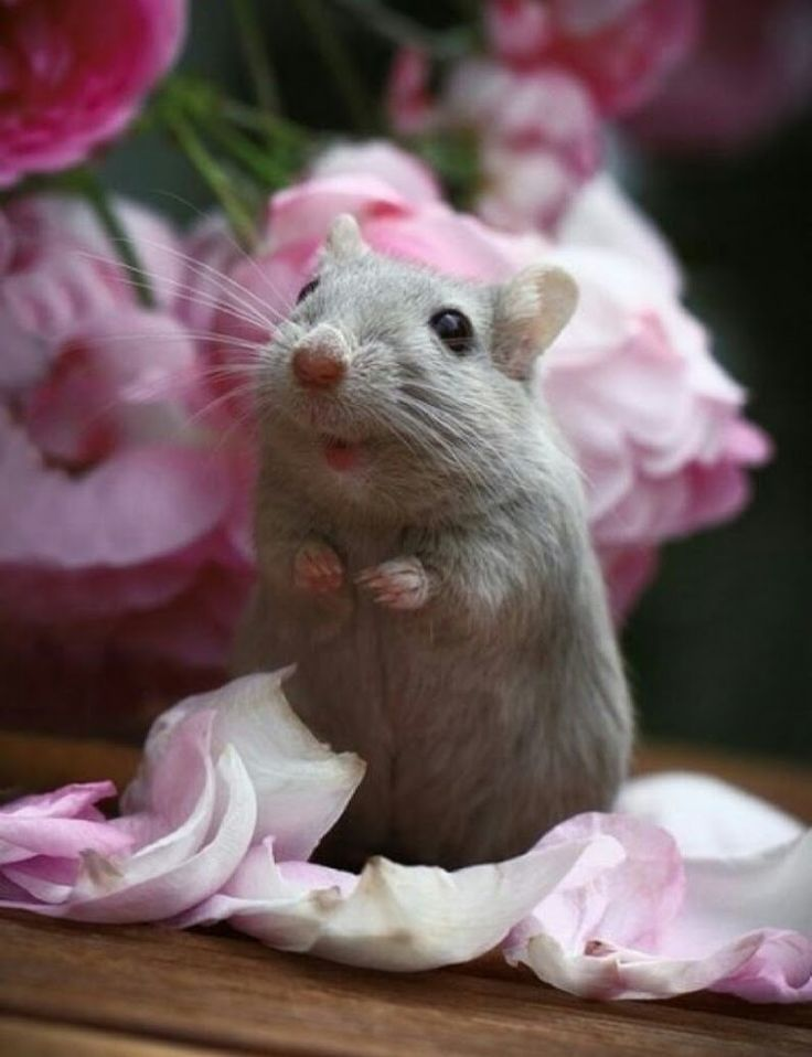 Картинки хомяк на цветке
