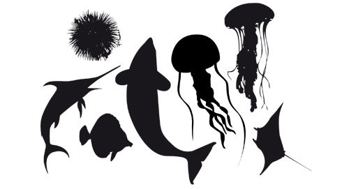 9 Best Images About Sea Animal Stencils On Pinterest