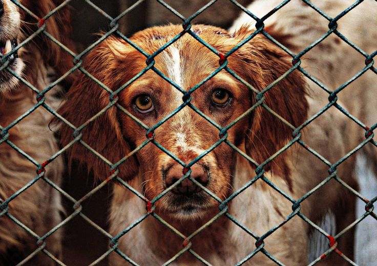 End The China Yulin Dog Meat Festival  http://worldanimal.foundation/news/end-the-china-yulin-dog-meat-festival