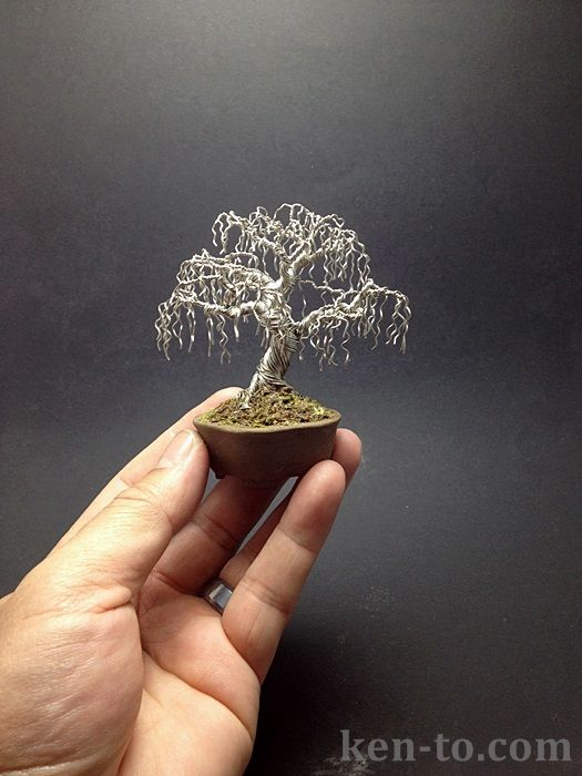 Weeping wire bonsai tree