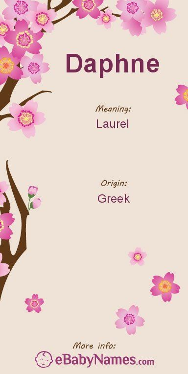 The origin & meaning of the name Daphne