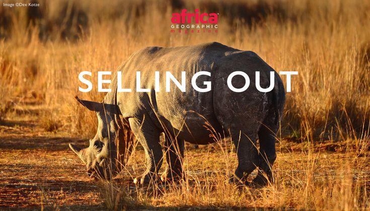 #RhinoFriday #LoveAfrica #BeInspired #Explore