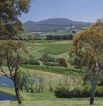 Arancia Bed and Breakfast, luxury accommodation, Orange NSW, stunning panoramic rural views, Mount Canobolas.