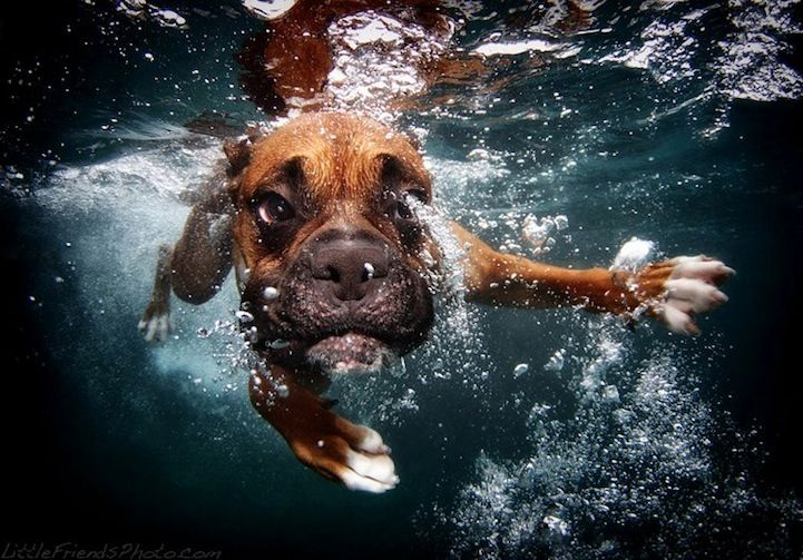 More Hilarious Photos of Dogs Playing Fetch Underwater