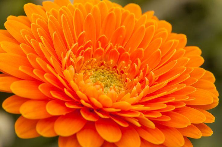 Beautiful orange...!