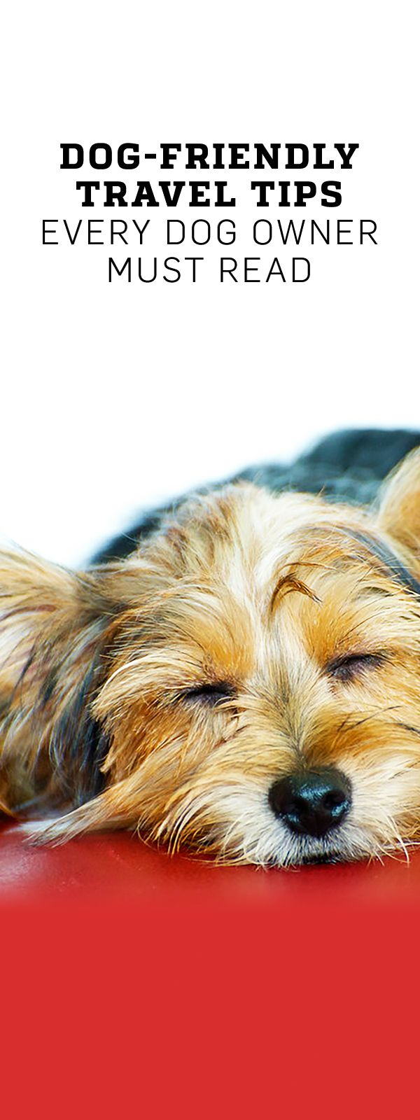 Dog-Friendly Travel Tips for Vacationing with Your Pet