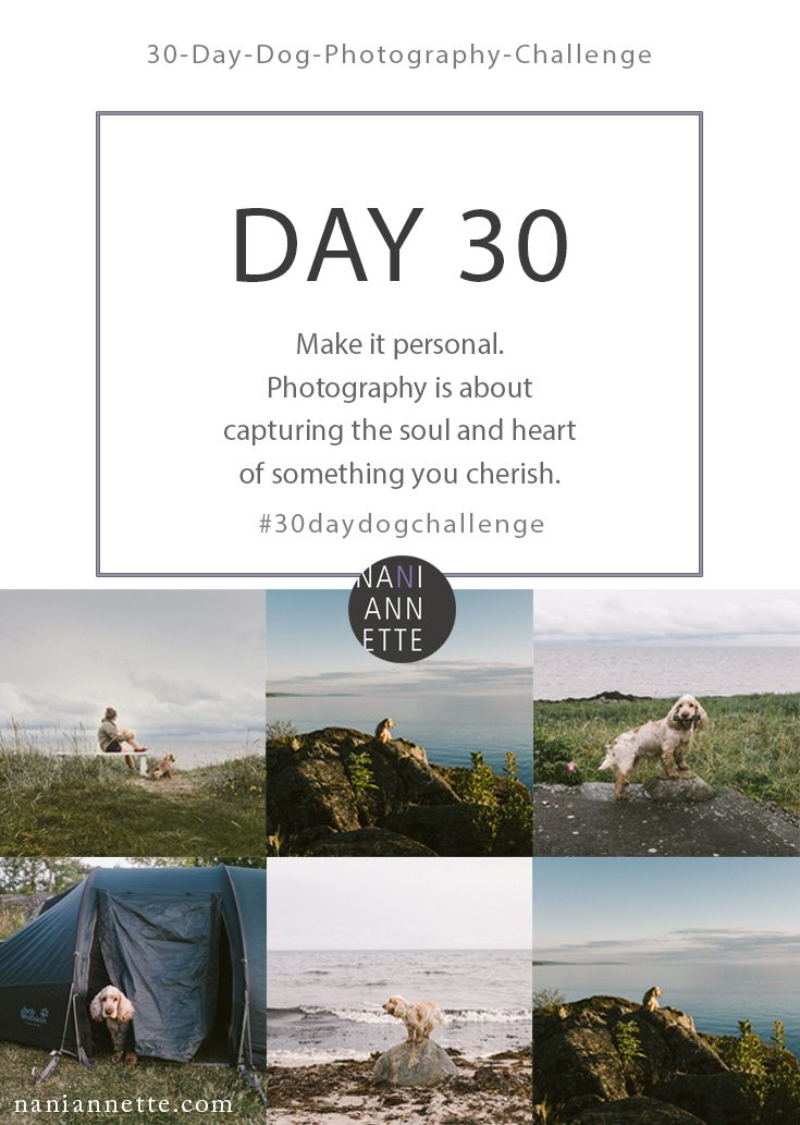 Day 30 of 30 Day Dog Photography Challenge  Make it personal. Photography is about capturing the soul and heart of something you cherish.  Share your images in Instagram using #30daydogchallenge.
