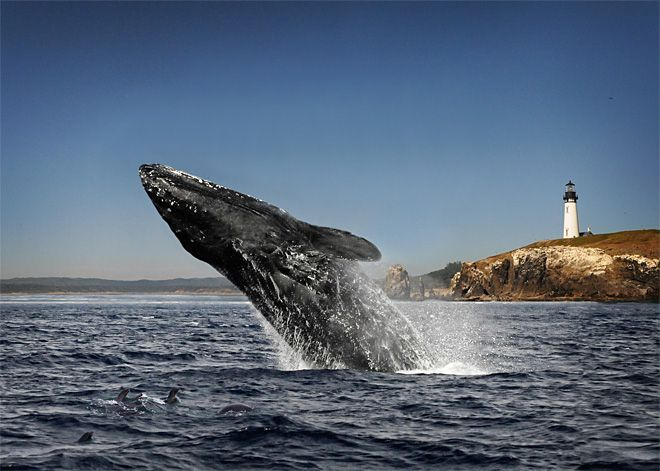 Whale Watching Week at the Oregon Coast « Hasson
