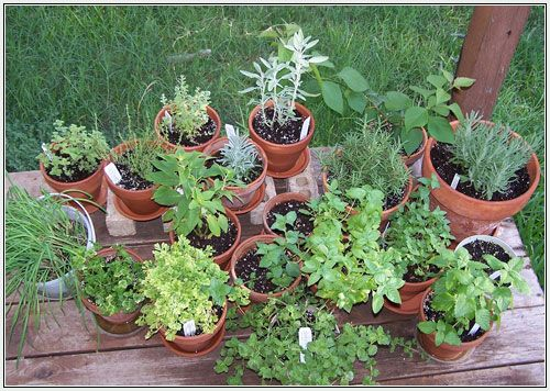 Best 25 Potted herb gardens ideas on Pinterest