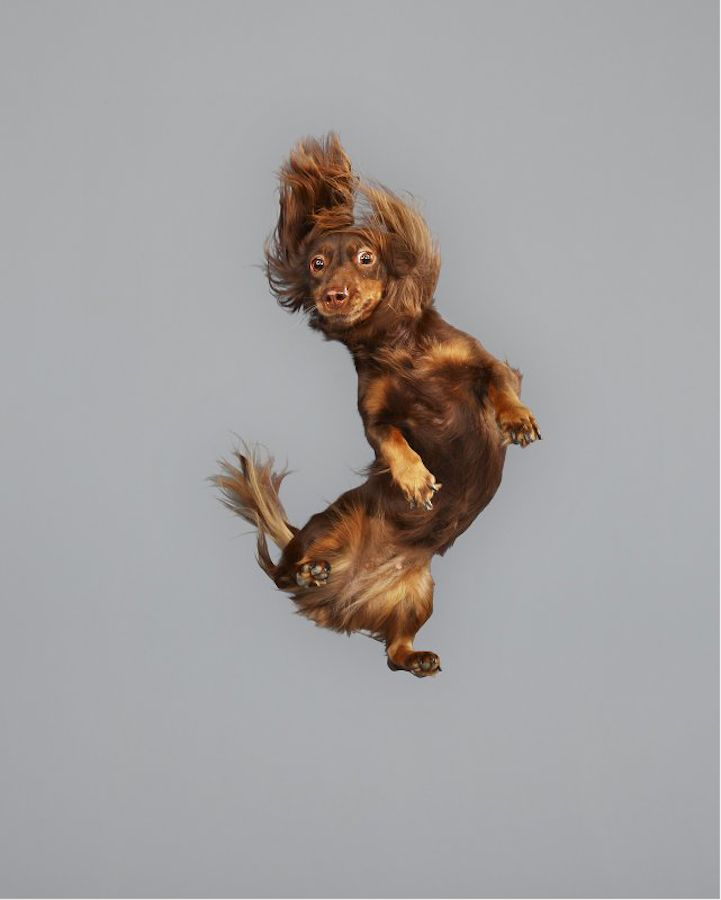 Hilarious portraits of cute dogs floating in mid-air