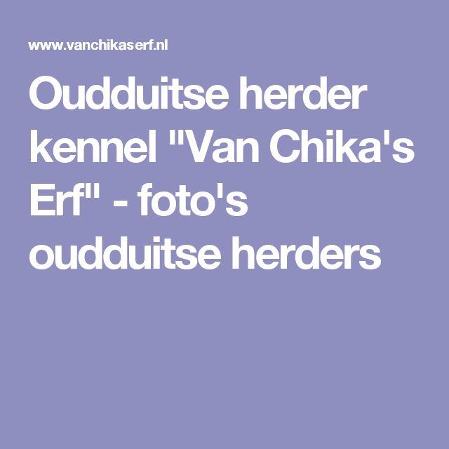 """Oudduitse herder kennel """"Van Chika's Erf"""" - foto's oudduitse herders"""