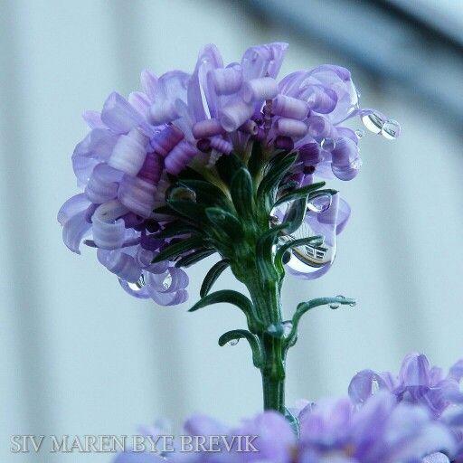 Macro waterdrops flower