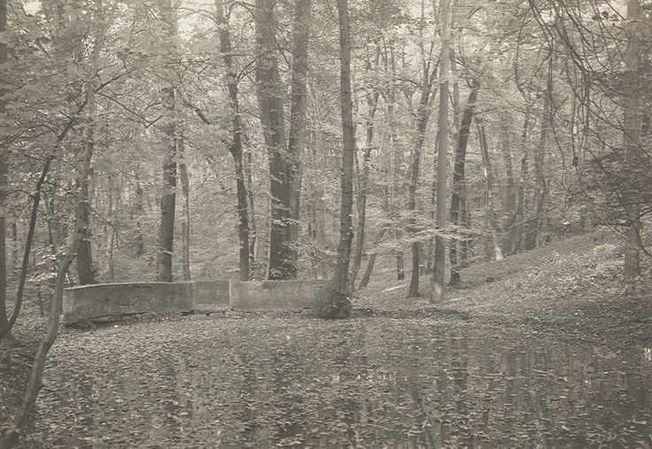 Lesy na Cibulce | Pražská příroda