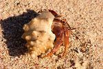 Hermit Crab Is Losing Legs and Isolating Himself