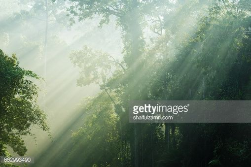 Stock Photo : Morning view of Endau Rompin National Park, straddling the Johor/Pahang border, is the second designated national park in Peninsular Malaysia. It covers an area of approximately 80,000 hectares.