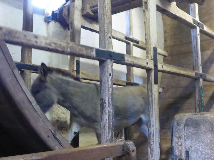 The Donkey Wheel, Carisbrooke Castle.