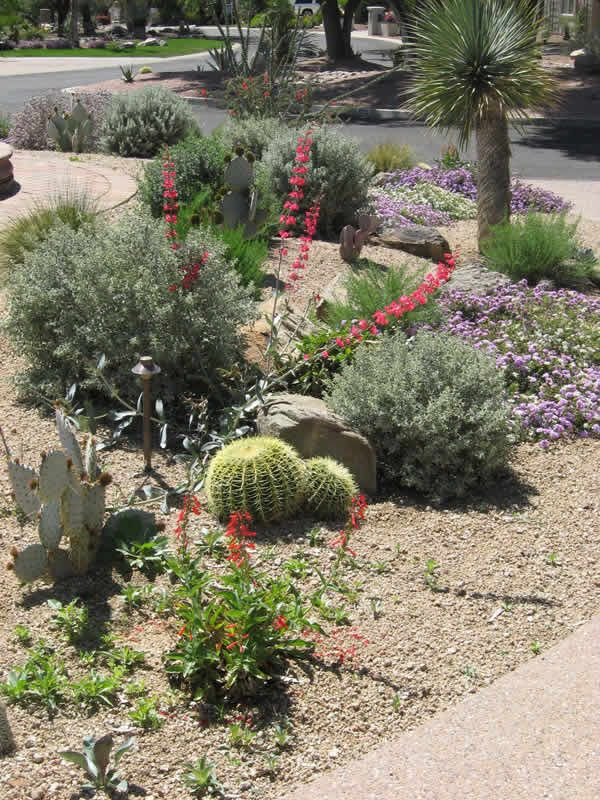 Garden Ideas Arizona 55 best arizona landscaping images on pinterest | arizona