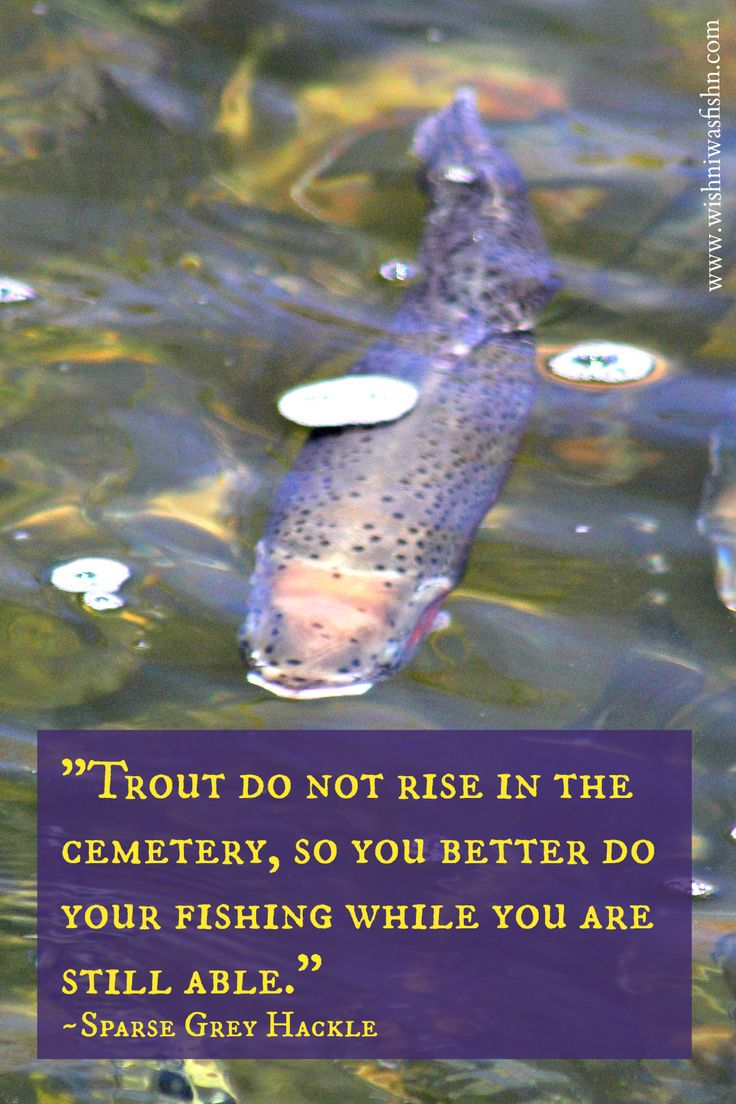 17 best images about fishing quotes on pinterest fisher for Rising fly fishing