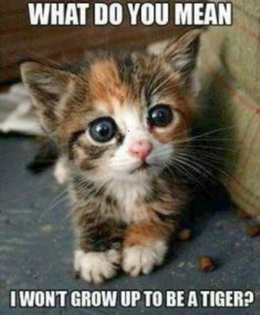 What Does This Big Button Do Cute Animals Funny Animal Pictures Cute Baby Animals