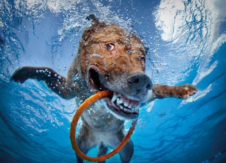 Dogs Fetching Things – Hunde unter Wasser – Die berühmte Fotoserie von Seth Casteel.