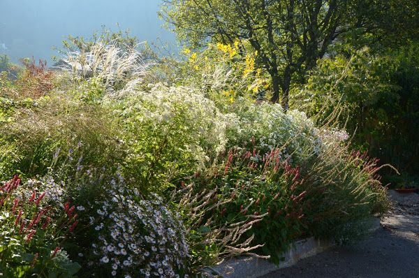 Storchschnabel und andere Stauden: Das Bienen-Stauden-Beet