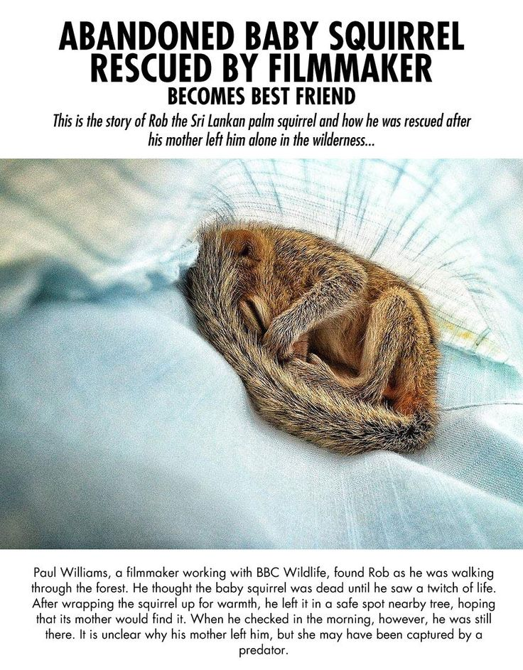 Baby squirrel gets rescued. Thank you to the wonderful man who saved this precious sentient being.