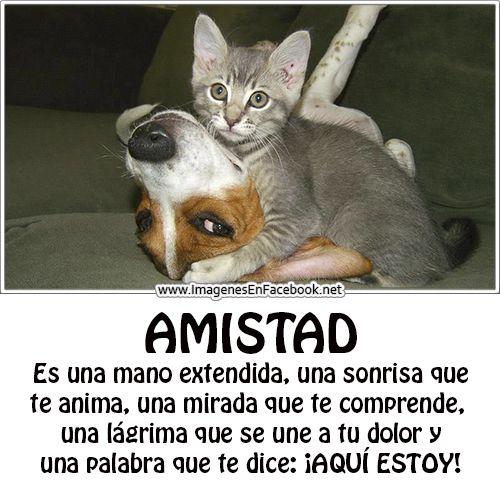 AMISTAD: Es una mano extendida, una sonrisa que te anima #amistad #amiga #amigos #amigas #amigo