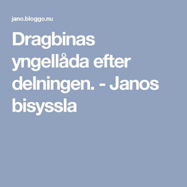Dragbinas yngellåda efter delningen. - Janos bisyssla